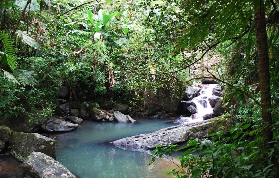 Водопады, заросли, леса