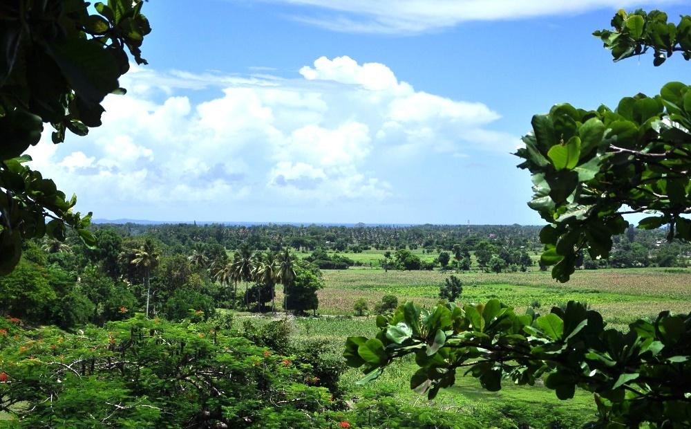 Лес на Гаити, природа