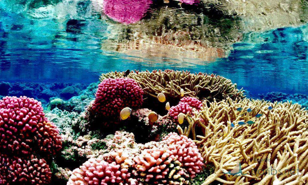 Гаити рифы