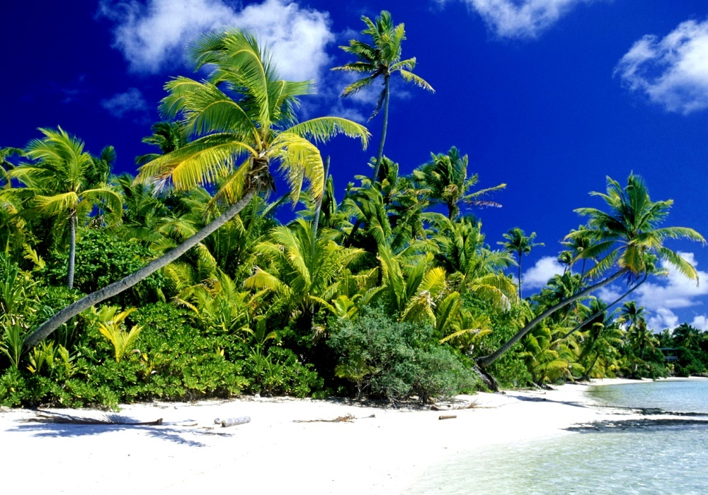 Природа Гаити, кокосовые пальмы
