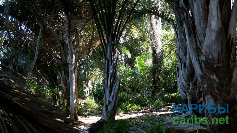 Ботанический сад Даймонд Фоллс