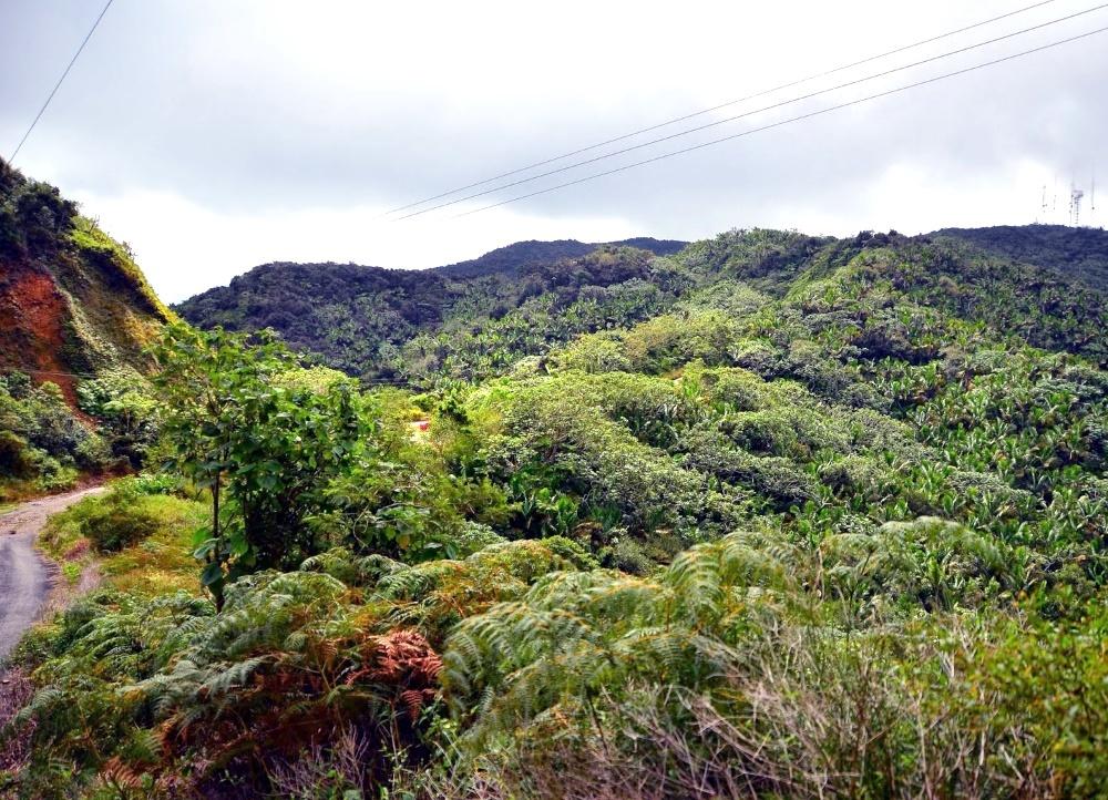 Дорога на вершину Cerro de Punta