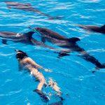 Купание с дельфинами на Багамах