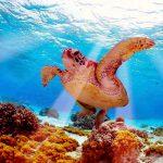 Остров Барбадоса, черепахи