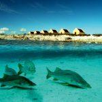 Рыба на Бонэйро