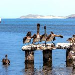 Остров Маргарита природа