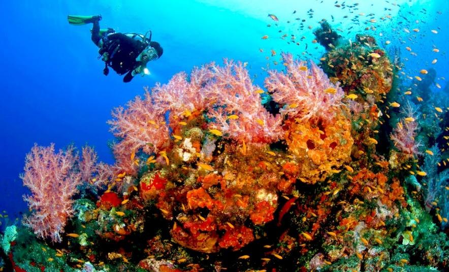 Дайвинг на острове Маргарита на Карибах