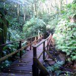 Остров Сент-Винсент джунгли