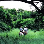 Конные прогулки для туристов на Санта-Крус