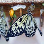 ферма бабочек остров Сен-Мартен