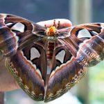 ферма бабочек на острове Сен-Мартен