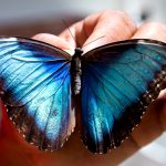 St-Maarten Butterfly Farm