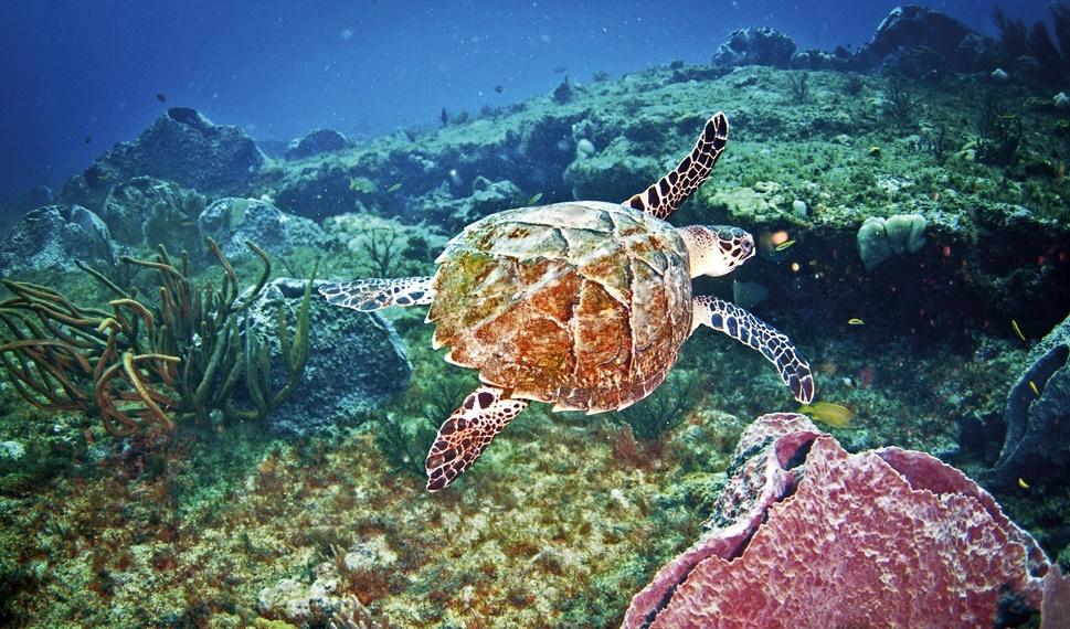 Остров Тобаго, дайвинг
