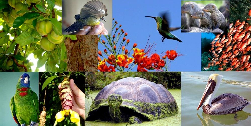 Флора и фауна Доминики